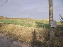 Terreno Agricolo in Vendita in Molise Civitacampomarano Terreno Patrizia