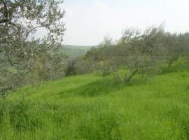 Terreno Agricolo in vendita Civitacampomarano Terreno con diruto
