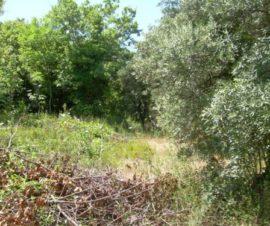 terreno in vendita in molise