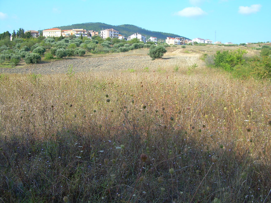 Terreno in vendita in Molise
